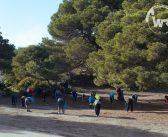 Forêt de Canastel